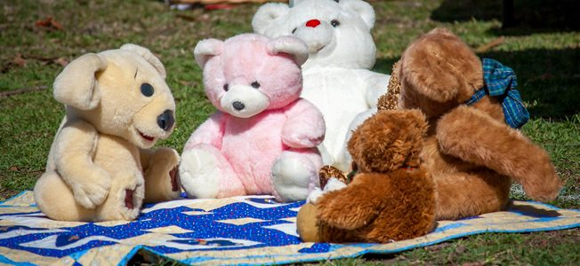Do Bears Picnic In The Woods?